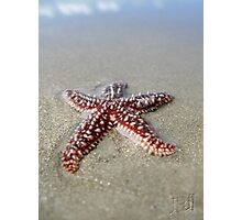 Starfish in the Sand Photographic Print