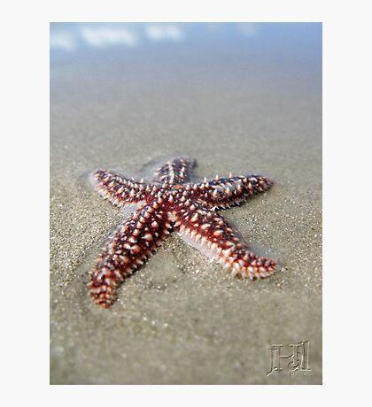 Starfish in the Sand Photographic Print
