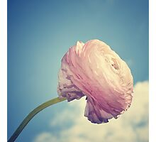 Nature's candy floss Photographic Print