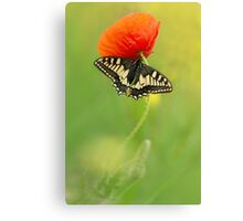 Impression with butterfly and red poppy Canvas Print