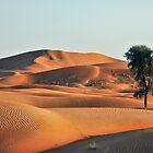 sunset in the desert by David Clark