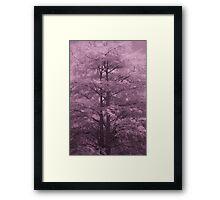 Cypress Framed Print