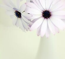 Daisies in a White Vase by Penelope Thomas