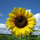 Sunflower by AcePhotography