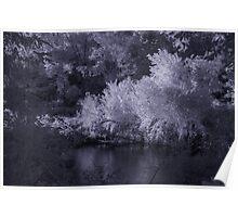 Infrared Pond Poster