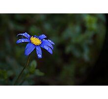 Beauty ~ No 1 Photographic Print