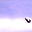 Freedom Bird by Augustina Trejo