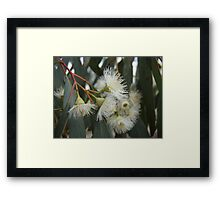 Gumnut Flowers Framed Print
