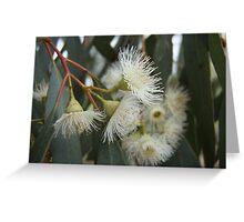 Gumnut Flowers Greeting Card