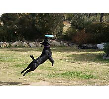 Frisbee Catch Photographic Print
