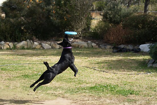 Frisbee Catch by Sharon Robertson