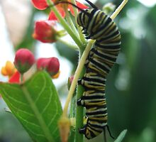 Caterpillar Flower by Emily Sainsbury