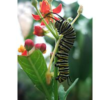 Caterpillar Flower Photographic Print