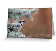 Haughty Blue Jay Greeting Card