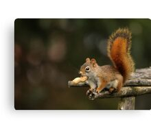 Surprised Red Squirrel With Peanut Canvas Print