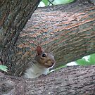 Squrill in tree by candy