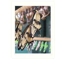 Emerging Butterflies Art Print