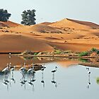 Sand Dune Flamingos by David Clark