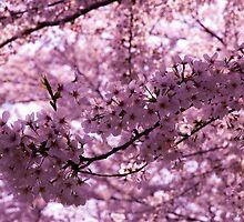 Flower Viewing - Japanese Hanami by Massaki Miyamura Di Napoli