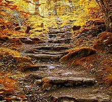 Autumn Wander by Simon Duckworth