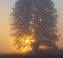 Morning Tree by babyangel