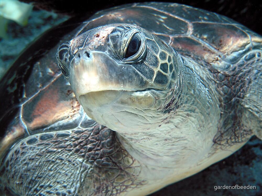 Green Turtle Eye by gardenofbeeden