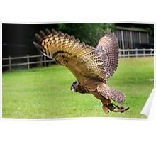 Eurasian Eagle Owl In Flight             (Same Bird Different Angle) Poster