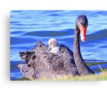 Cygnets Mobile Home  Canvas Print