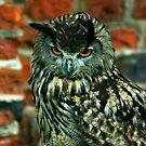 Eagle Owl -2 by Trevor Kersley
