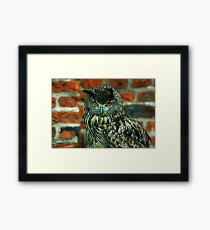 Eagle Owl -2 Framed Print