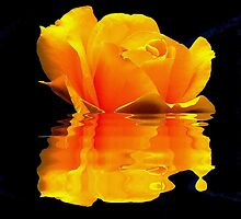 YELLOW ROSE REFLECTION by Johan  Nijenhuis
