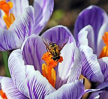 To Bee Happy by Debbie Oppermann