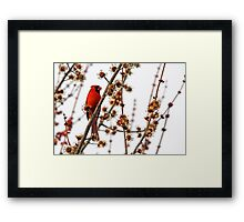 Northern Red Cardinal Framed Print