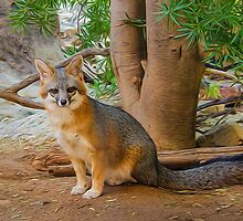 Grey Fox by Barbara Manis