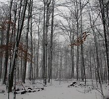 Winter Storm In The Bush by Debbie Oppermann