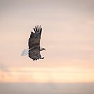 Soaring Into The Sunrise by Thomas Young