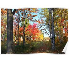 Autumn Forest Killarney Provincial Park Poster