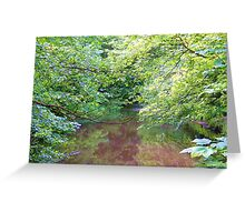 Trees over a tranquil stream Greeting Card