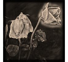 Portrait of a Dying Rose Photographic Print