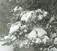 Winter Scene by Wabacreek Photography