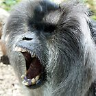 Angry Baboon by tdeuel98