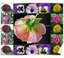 Bejewelled Orange Wildfire Rose Collage Poster