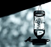 colibri 1 by tuetano
