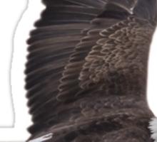 Isolated Eagle-2 Sticker