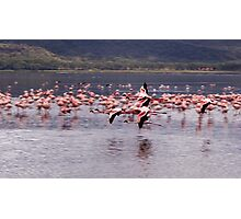 Flamingos flying at lake Nakuru, kenya Photographic Print
