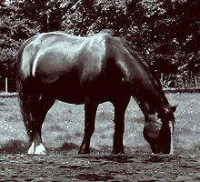 A Big Horse  by Ann Persse