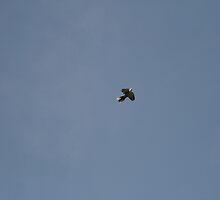Lonesome Dove by Neil Grainger