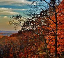 Autumn Horizon by Michellle McPhillips