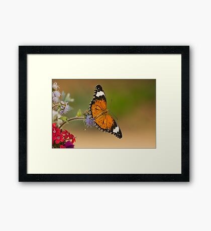 Flutter by..... Framed Print