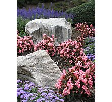 Hillside Garden Photographic Print